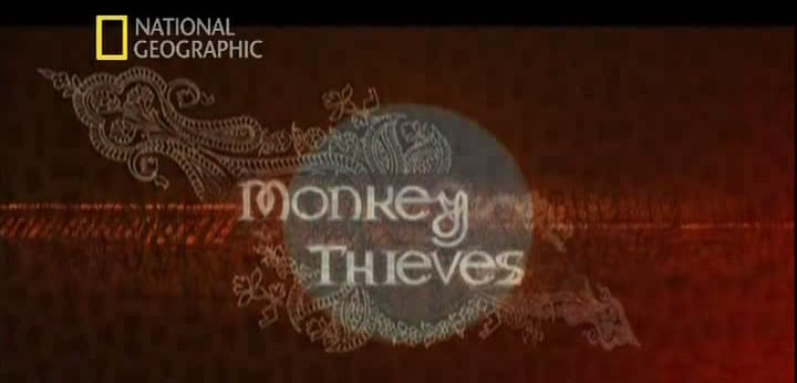 Monkeys thieves
